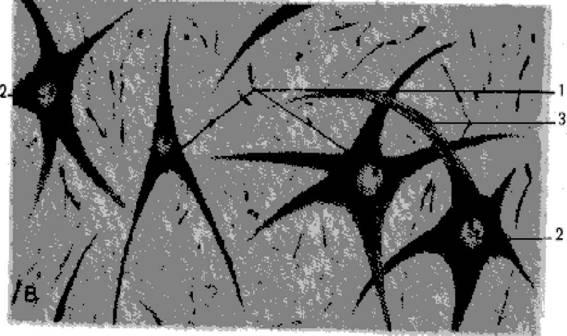 Руководство К Практическим Занятиям По Нормальной Физиологии Будылина