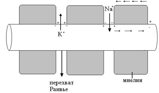 Механизм проведения