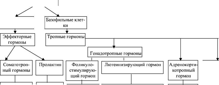 ukrainka-s-grudyu