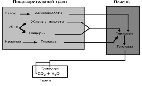 Схема. 17.6. Углеводный обмен